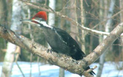Bird & Wildlife Watching & Photography